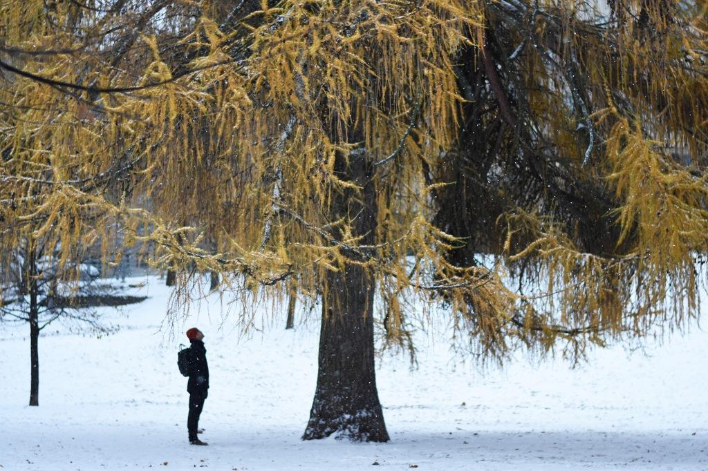 Lumisateelta suojassa