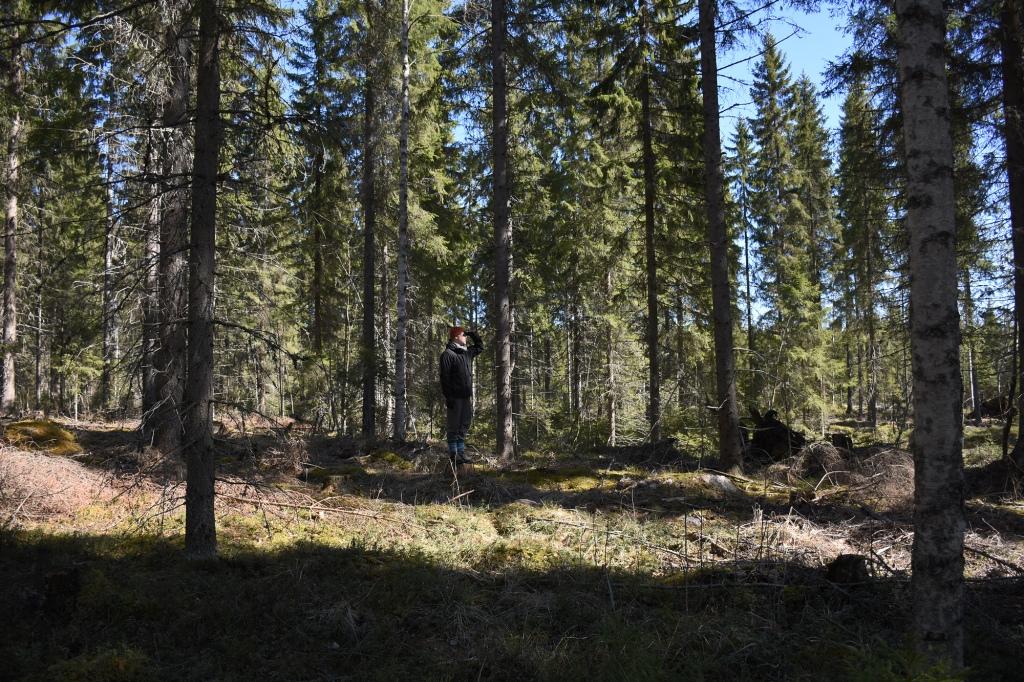 Keväinen metsä