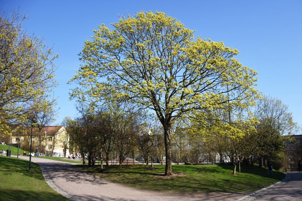 Kevät Koffin puistossa