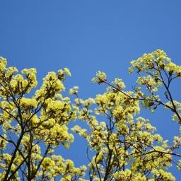 Katse ylös, sillä kevään merkit tunnistaa puista