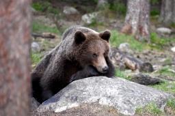 Yö karhuja kuvaamassa