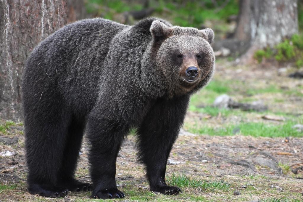 Karhun katse