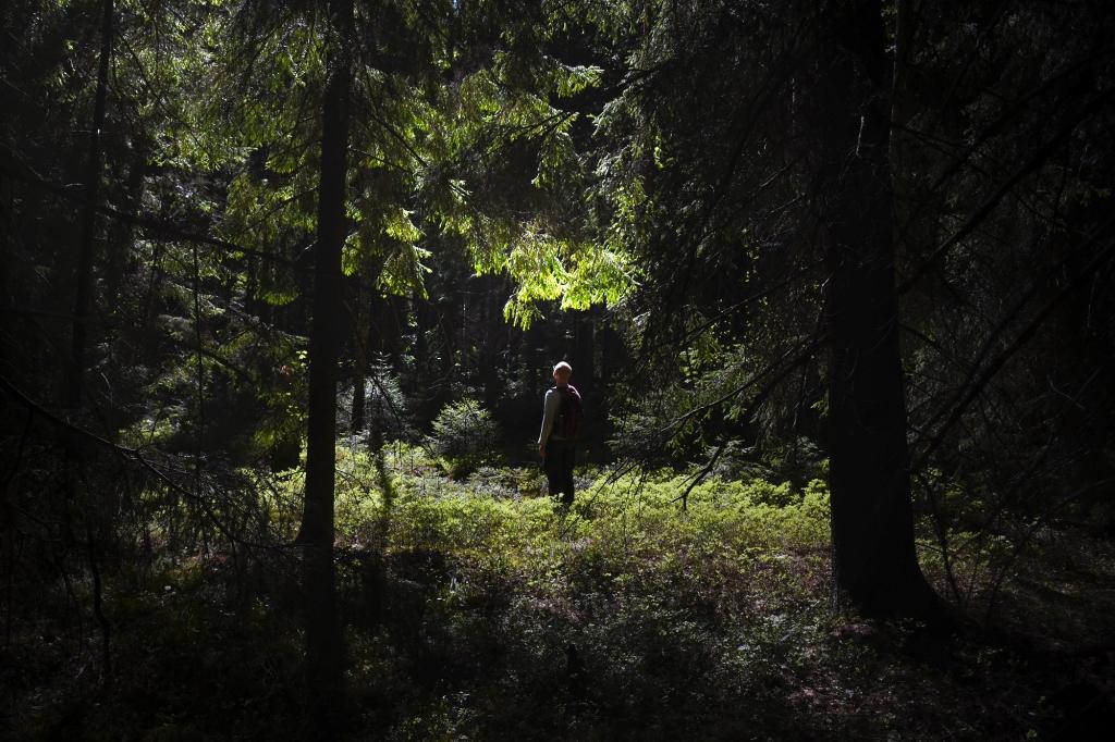 Valoa synkän metsän keskellä