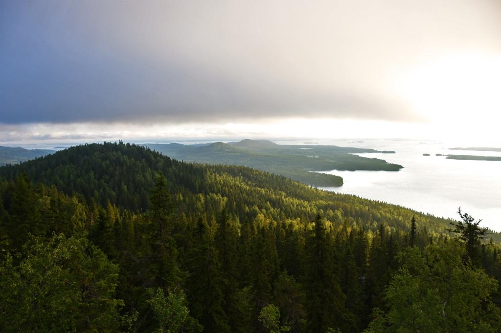 Aamun valo Ukko-Kolin huipulla