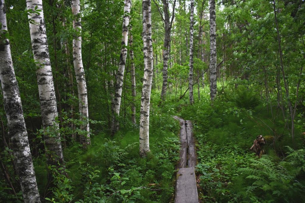 Karoliinanportaat pitkospuut