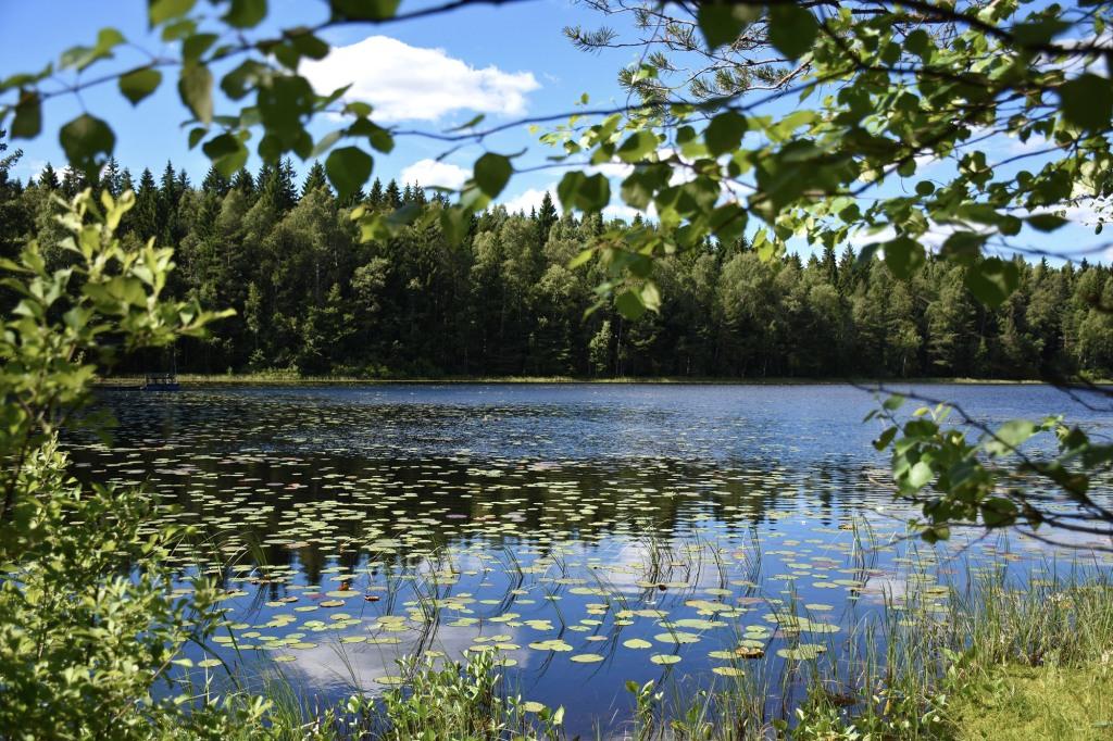 Bisajärvi Sipoonkorvessa