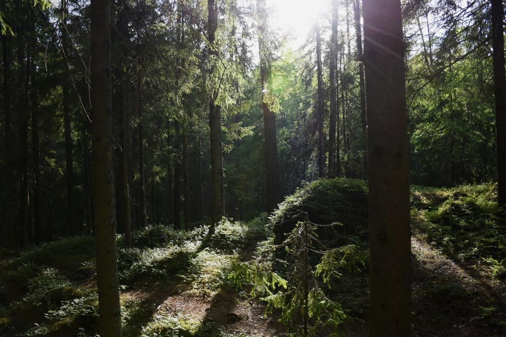 Nuotiokallion metsää
