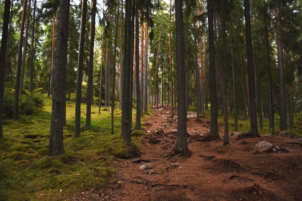 Repovesi metsäpolku