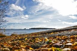 Syysaurinkoa ja ruskan värejä Lauttasaaressa