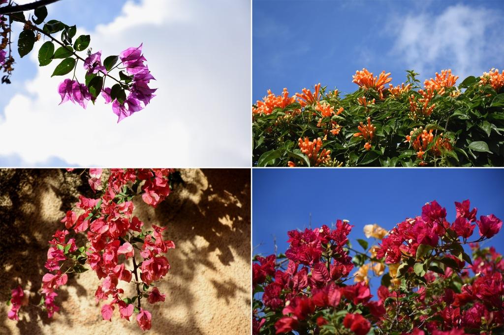 Kukkia Madeiralla
