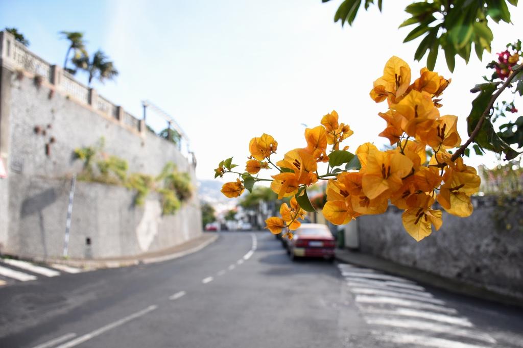 Kukkaloistoa Madeiralla