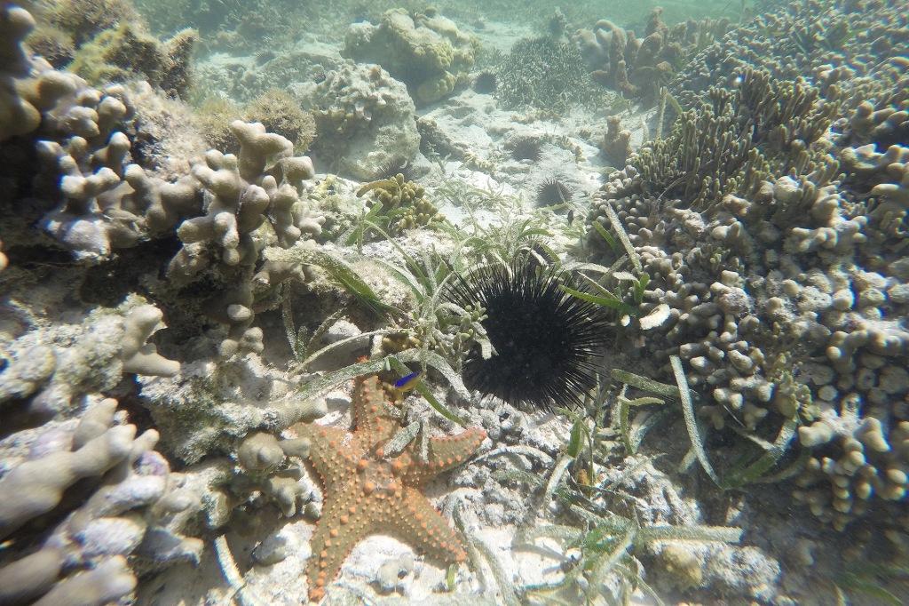 Meritähti ja merisiili