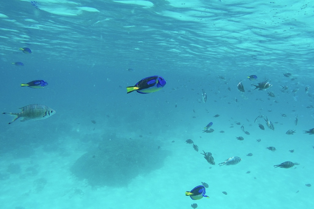 Mnemba-atollin pikkukalat