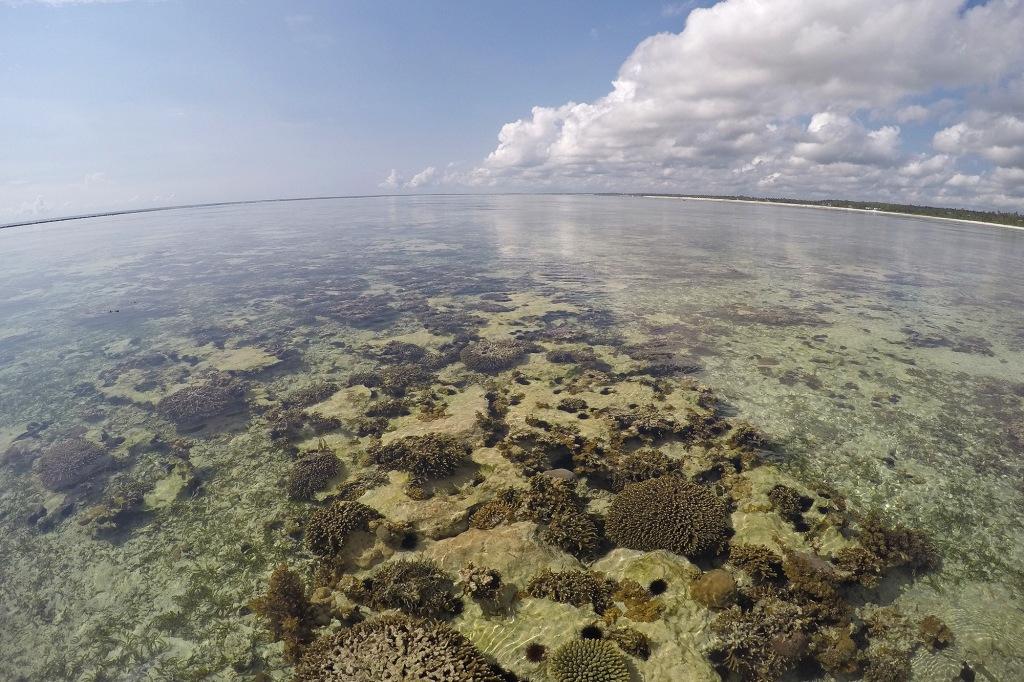 Koralleja Sansibarilla