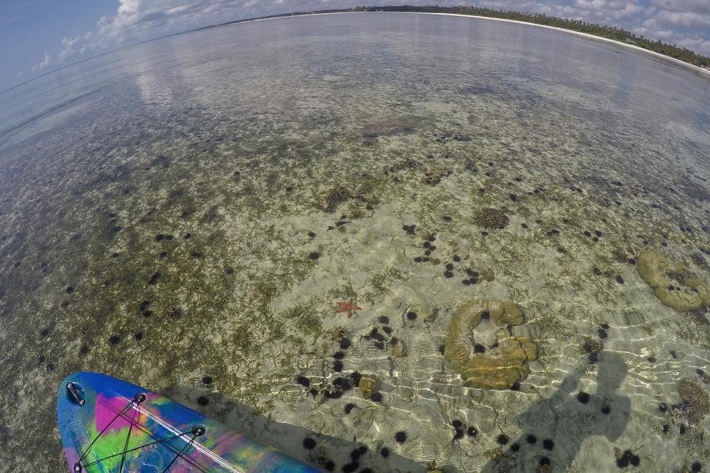 Meritähtiä ja merisiilejä suppaillessa