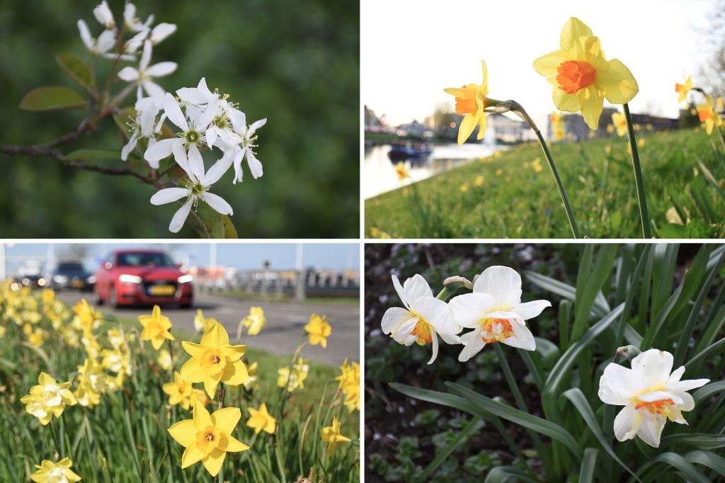 Kukkaloistoa keväisessä Utrechtissa