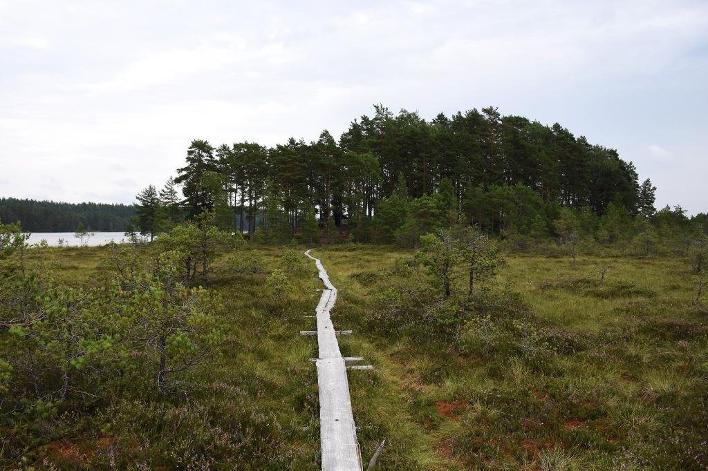 Polku Teerisaaren laavulle