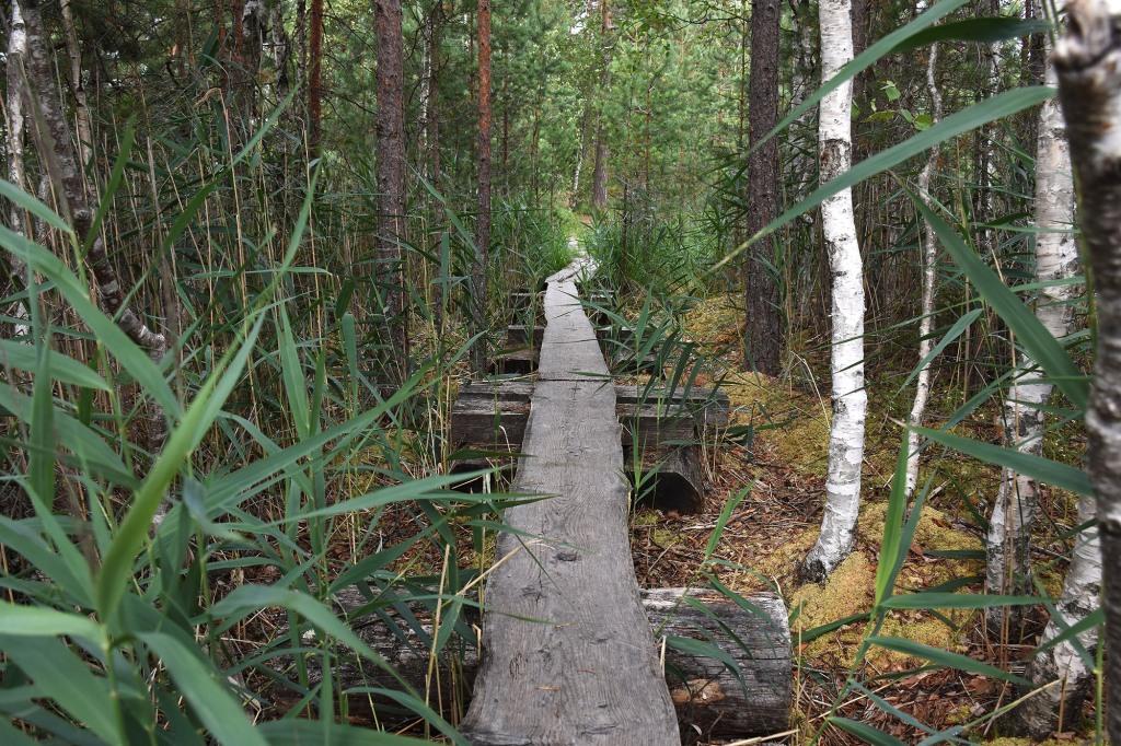 Teijon kansallispuiston pitkospuut