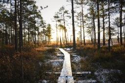 Torronsuon kansallispuisto ja karun suoluonnon kutsu