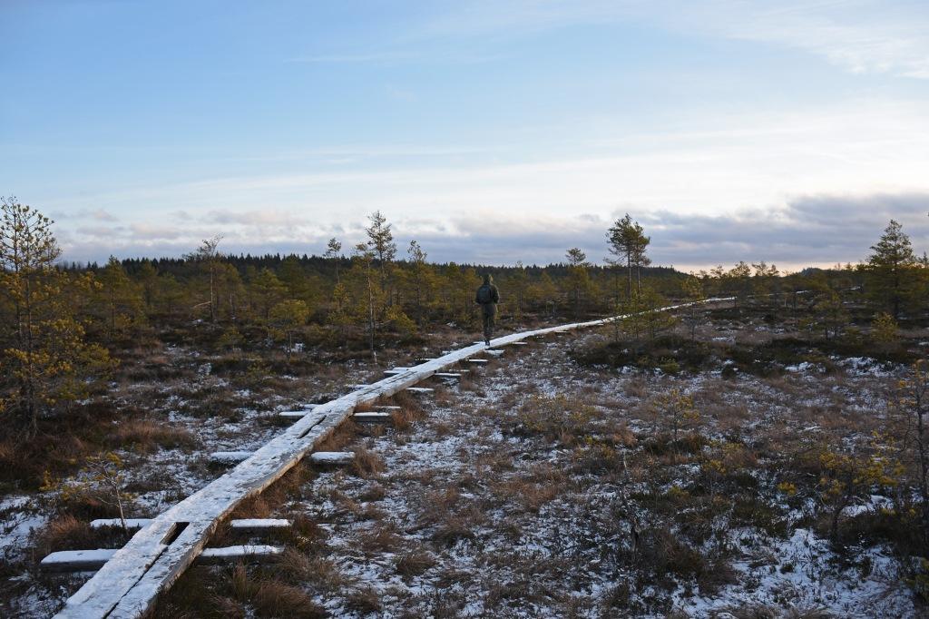 Vaeltaja Torronsuo kansallispuistossa