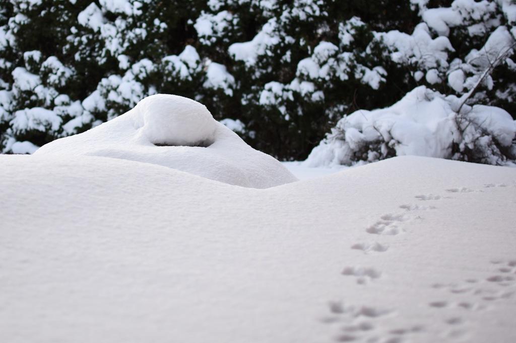 Jänisten jälkiä lumessa