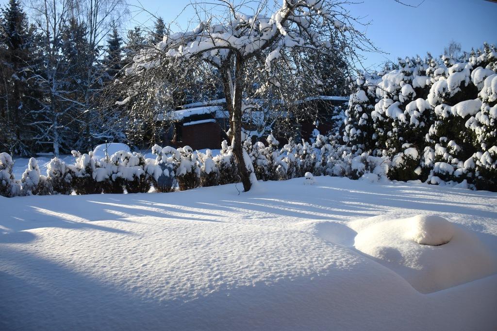 Kotipihan lumihanget
