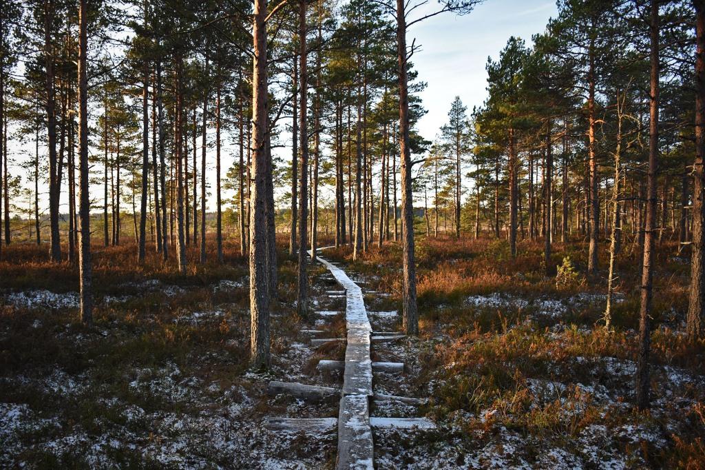 Torronsuon pitkospuut