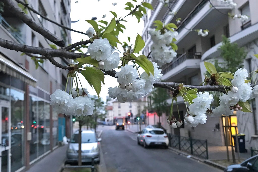 Kukkivia puita Pariisissa