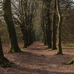 Utrechtse Heuvelrugin kansallispuisto – Luontohelmi keskellä Alankomaita