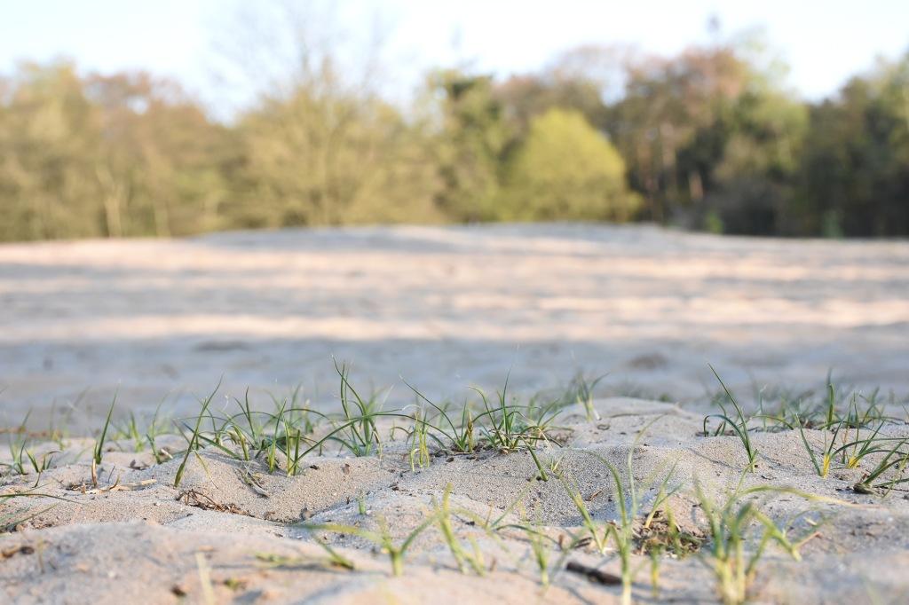 Utrechtse Heuvelrugin hiekkadyynit