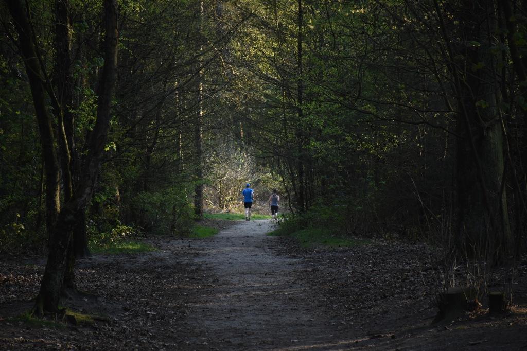 Juoksijoita Utrechtse Heuvelrugin kansallispuistossa