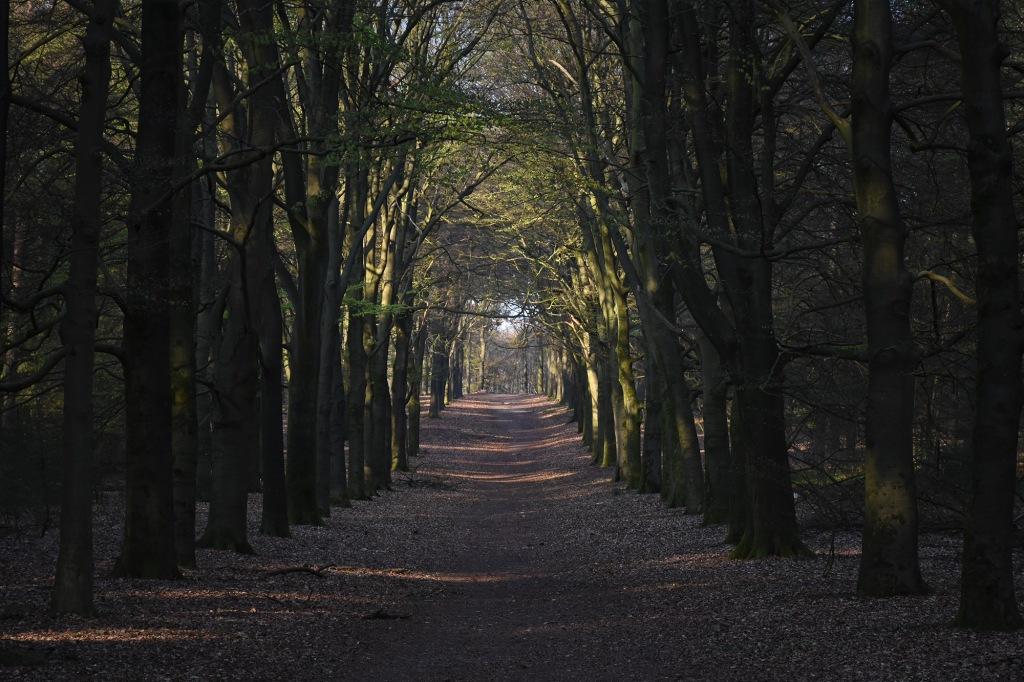 Puukäytävä Utrechtse Heuvelrugin kansallispuistossa