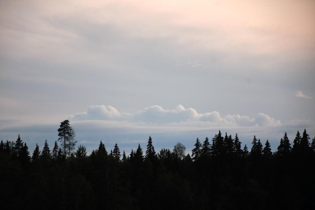 Kesäinen taivas ja puut