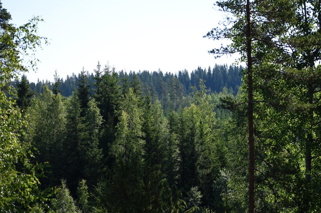 Metsämaisema mökkipatikoinnin taukopaikalta