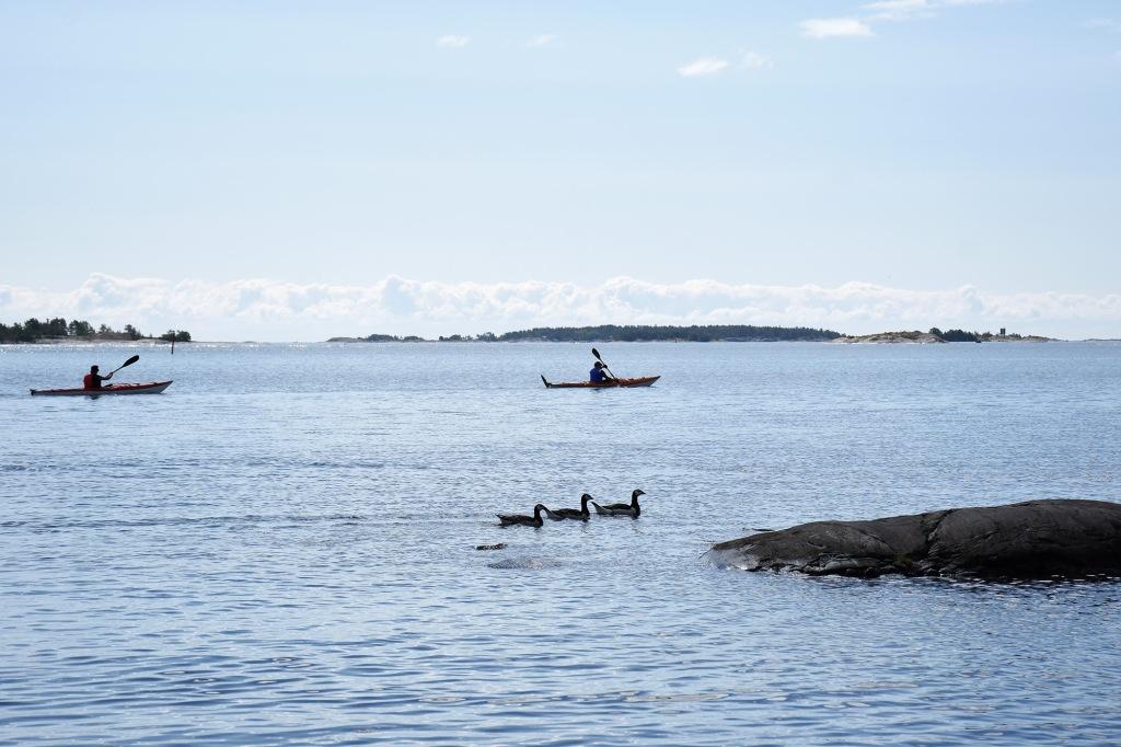Melojia ja valkoposkihanhia Porkkalanniemen vesissä