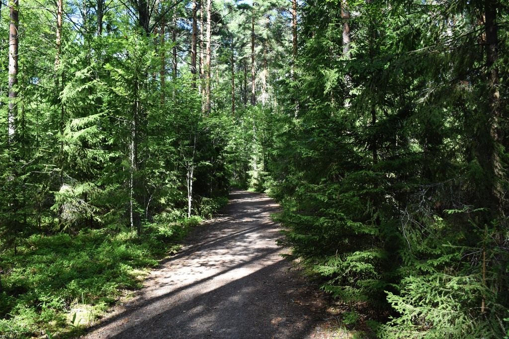 Metsätie Pulkkilanharjulla