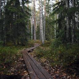 Olarin terveysluontopolku Espoon keskuspuistossa