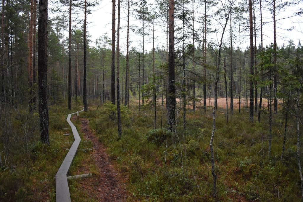 Pitkospuut Kaarniaispolulla