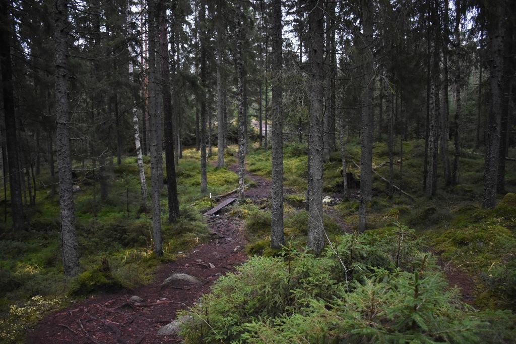 Metsäpolku ja pieni puro Kaarniaispolun varrella