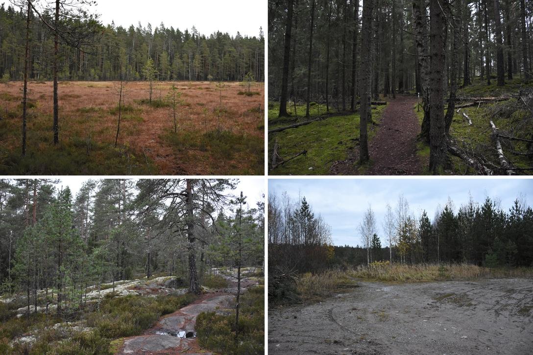 Kaarniaispolun neljä erilaista maisemaa