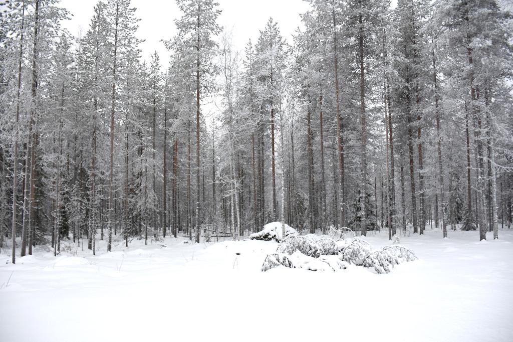 Luminen maisema napapiirillä