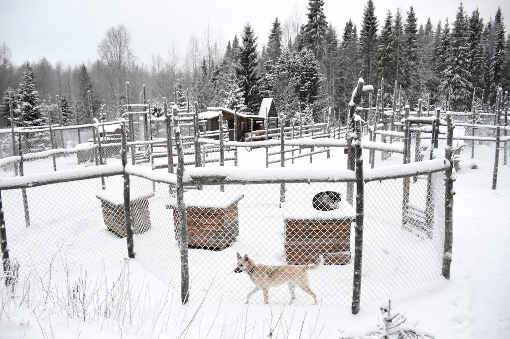 Shaman Huskies -koirien aitaukset