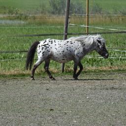 Koko perheen retki Kilkkilän farmin kotieläintilalle