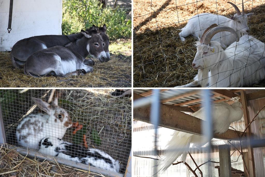 Kilkkilän farmin eläimiä