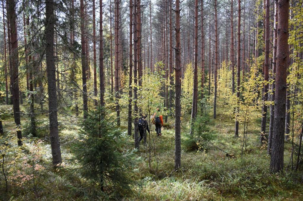 Tiirismaan metsää